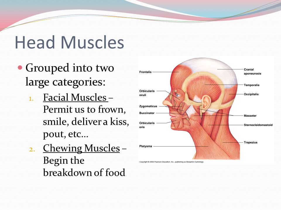 Outstanding Anatomy Of Head And Neck Ppt Vignette - Anatomy Ideas ...