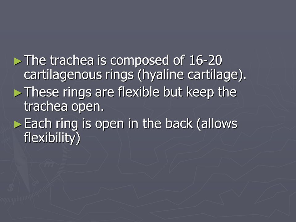 The trachea is composed of 16-20 cartilagenous rings (hyaline cartilage).