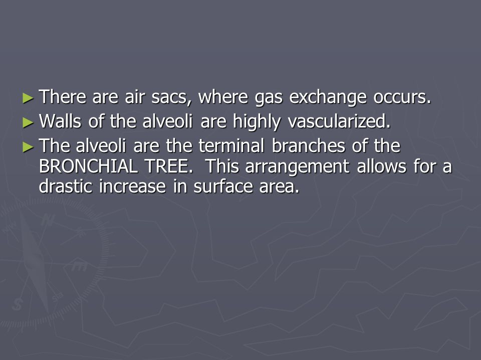 There are air sacs, where gas exchange occurs.
