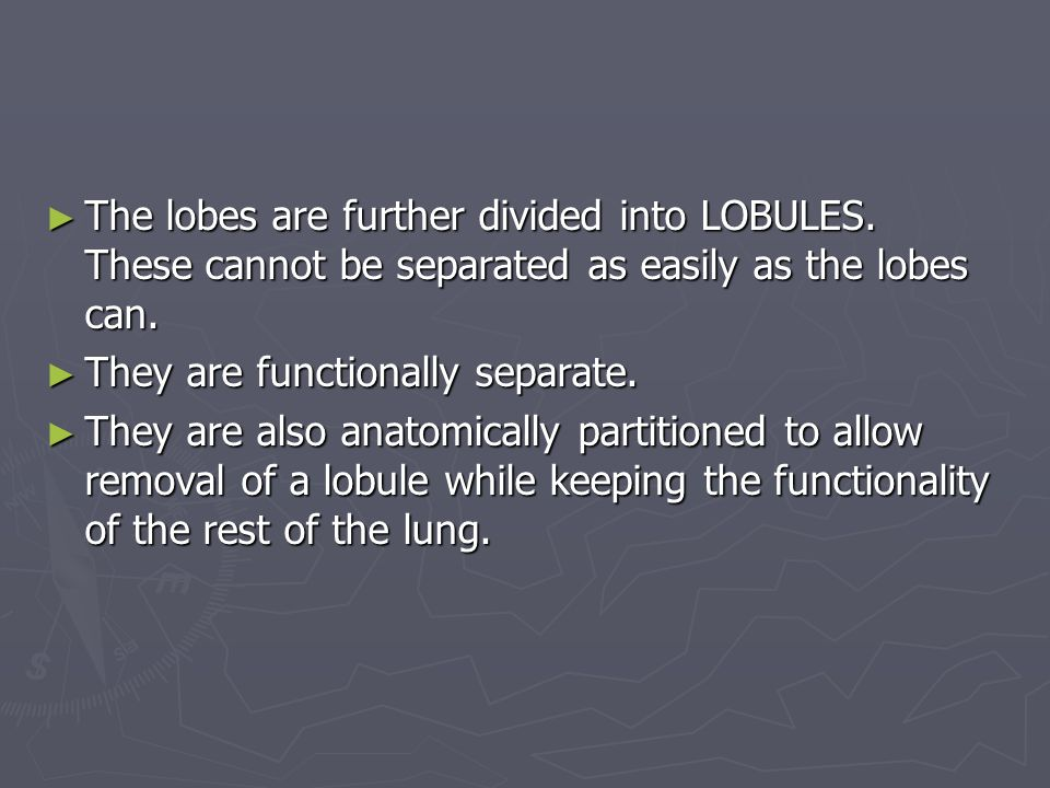 The lobes are further divided into LOBULES
