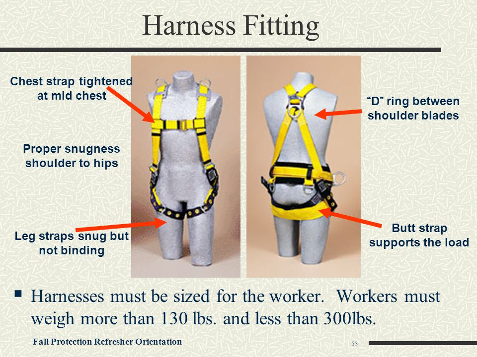 Harness Fitting Chest strap tightened at mid chest. D ring between shoulder blades. Proper snugness shoulder to hips.