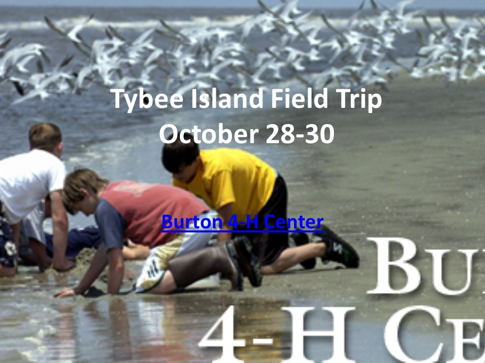 Tybee Island Field Trip October 28-30