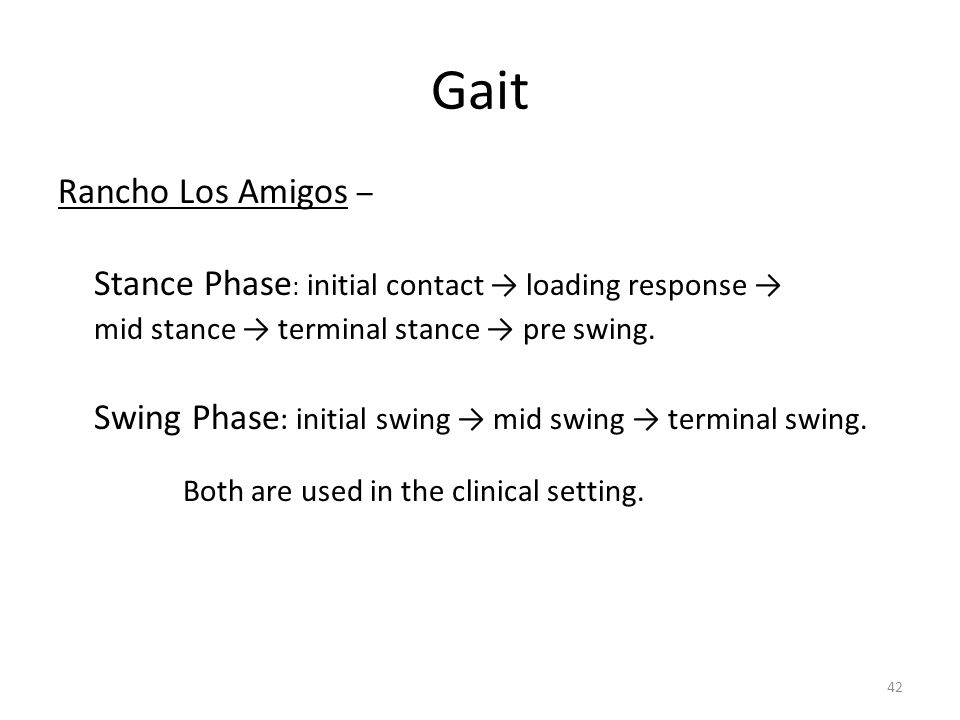Gait Rancho Los Amigos – mid stance → terminal stance → pre swing.