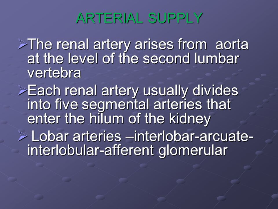 Lobar arteries –interlobar-arcuate-interlobular-afferent glomerular
