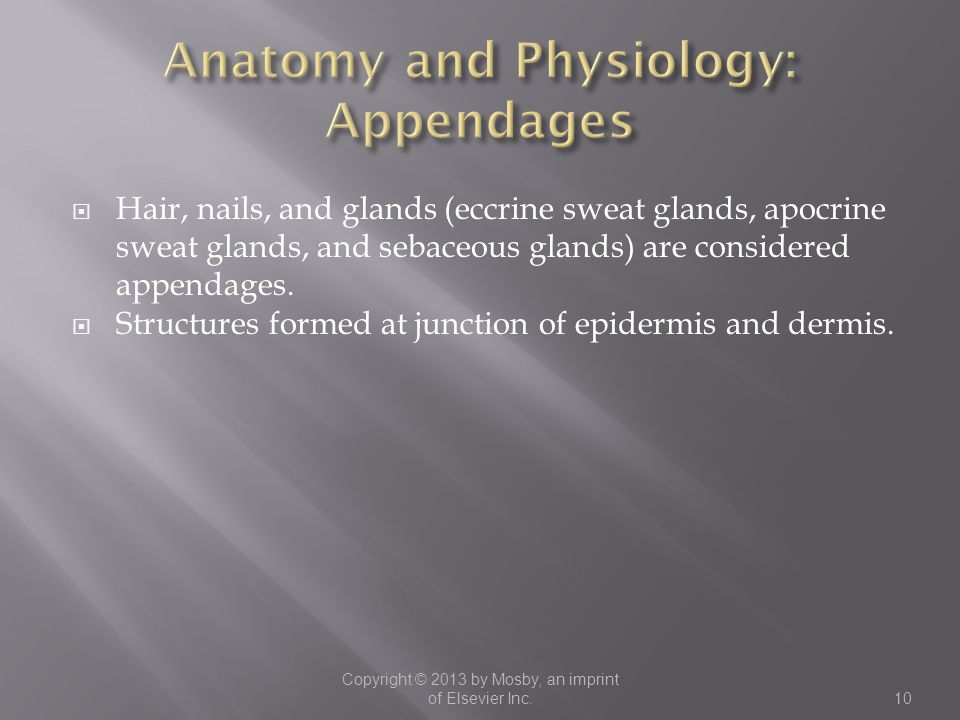 Anatomy and Physiology: Appendages
