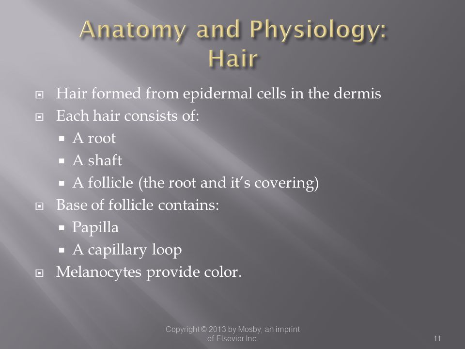 Anatomy and Physiology: Hair
