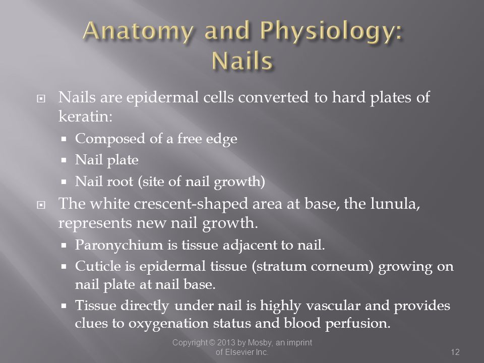 Anatomy and Physiology: Nails