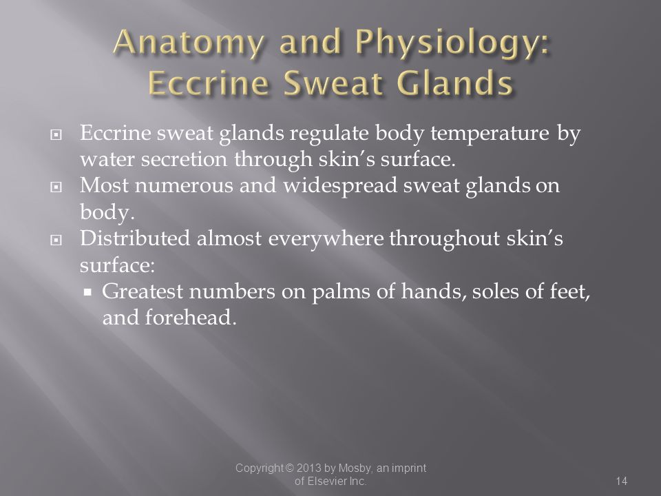 Anatomy and Physiology: Eccrine Sweat Glands