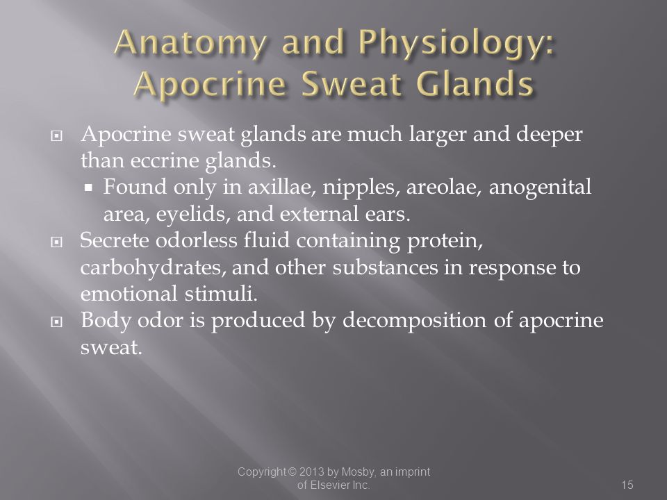 Anatomy and Physiology: Apocrine Sweat Glands