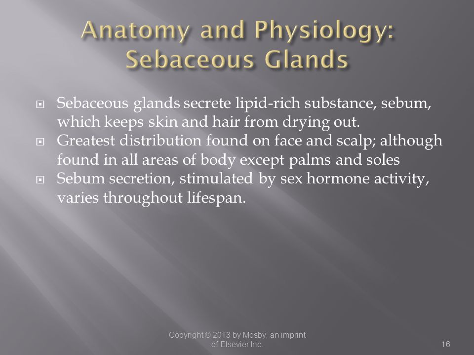 Anatomy and Physiology: Sebaceous Glands