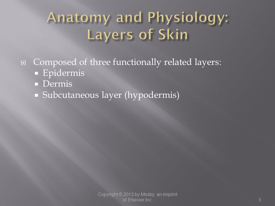 Anatomy and Physiology: Layers of Skin