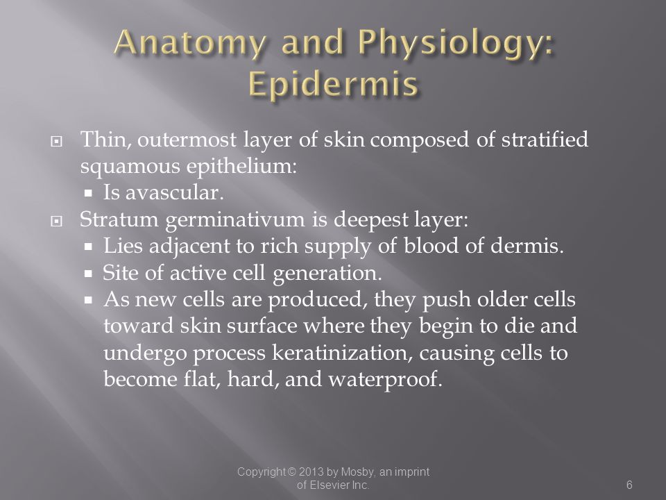 Anatomy and Physiology: Epidermis