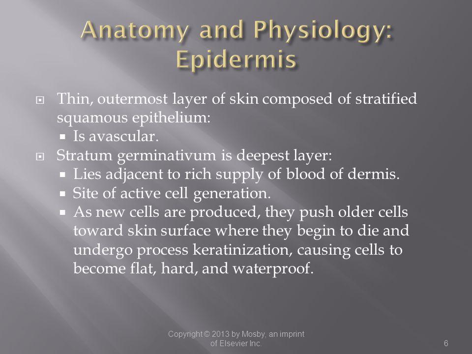 Anatomy and Physiology: Epidermis