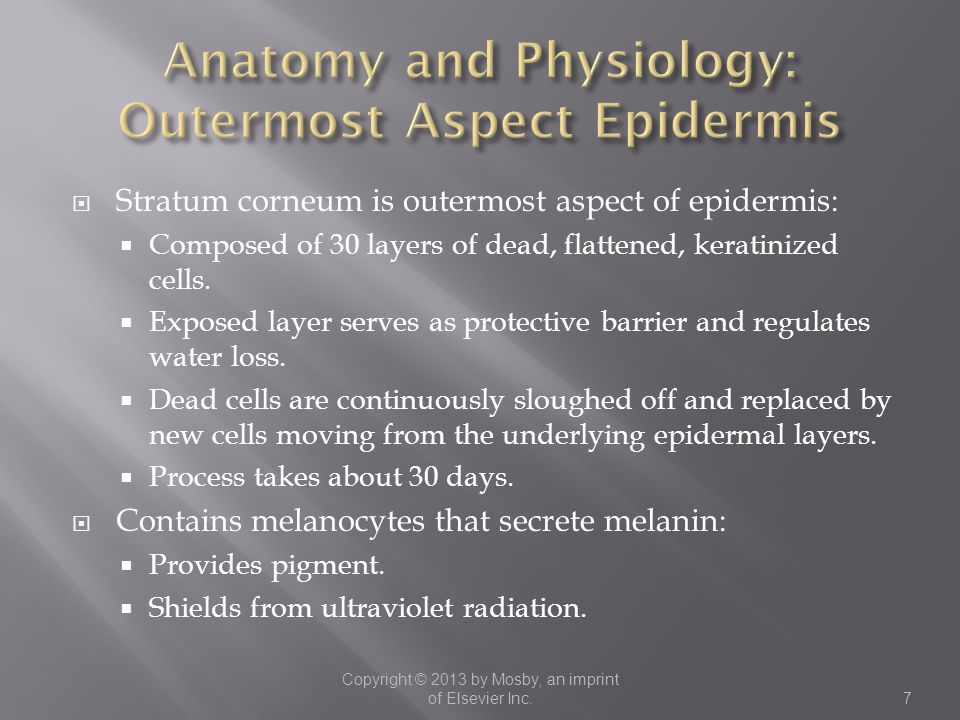 Anatomy and Physiology: Outermost Aspect Epidermis