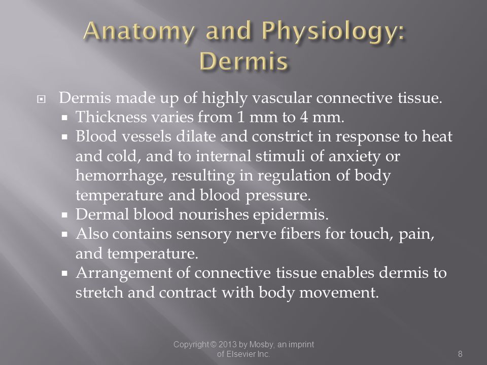 Anatomy and Physiology: Dermis