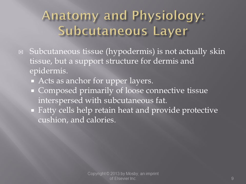 Anatomy and Physiology: Subcutaneous Layer
