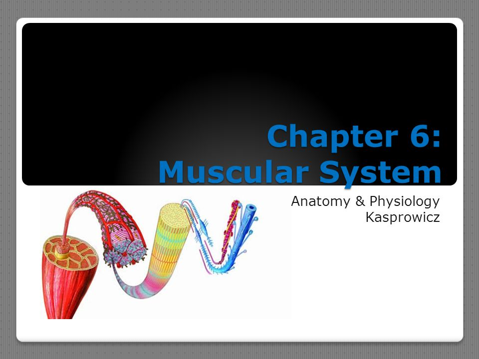 Colorful Anatomy And Physiology Chapter 6 Study Guide Collection ...