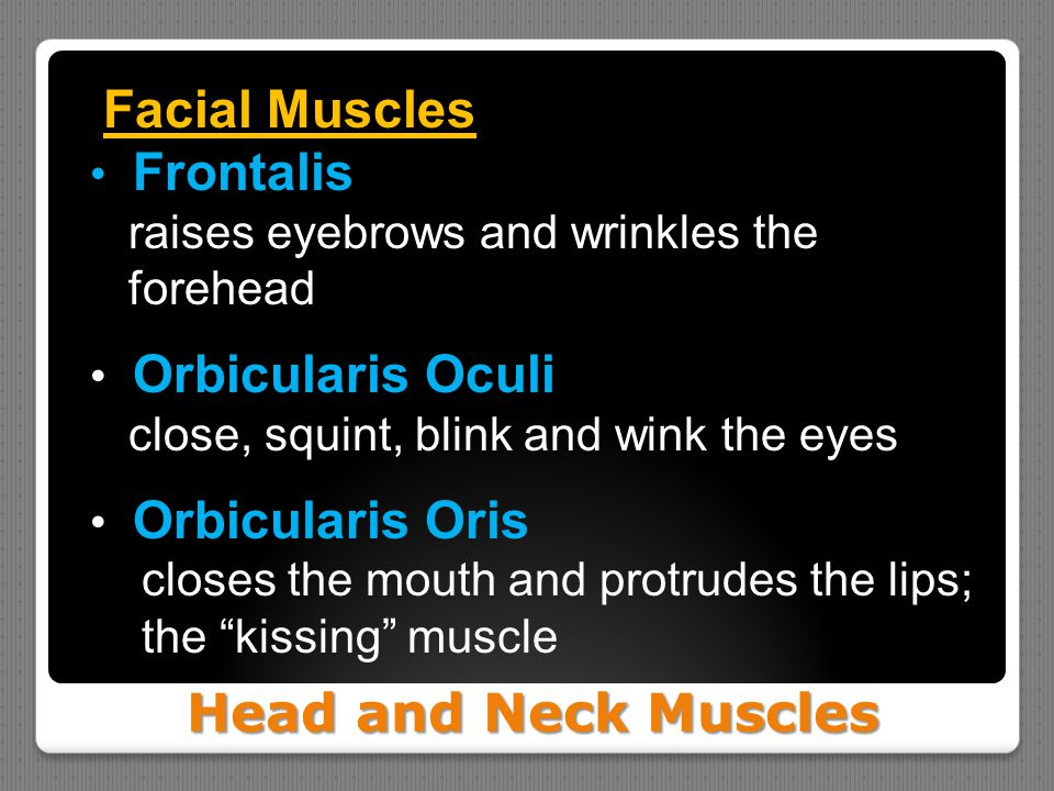 Head and Neck Muscles Facial Muscles Frontalis