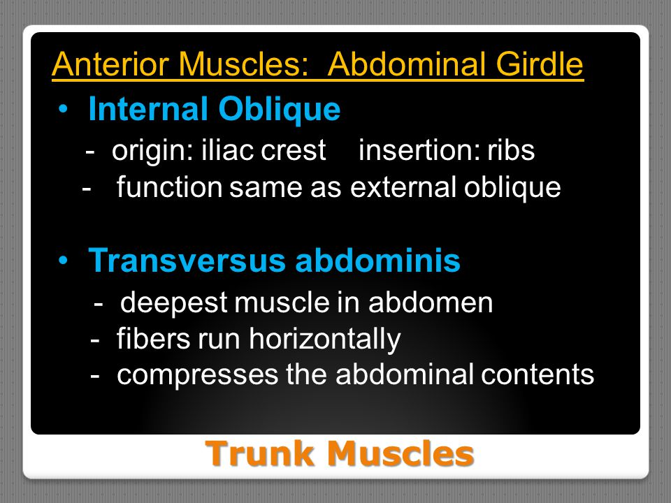 Anterior Muscles: Abdominal Girdle Internal Oblique