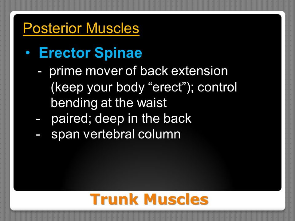 - prime mover of back extension