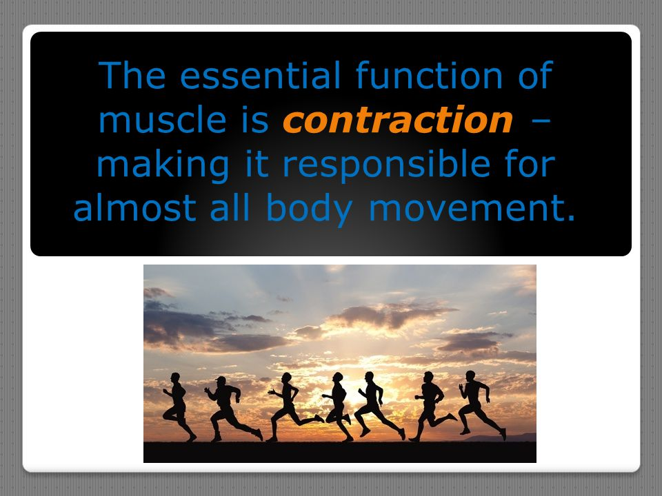 The essential function of muscle is contraction – making it responsible for almost all body movement.