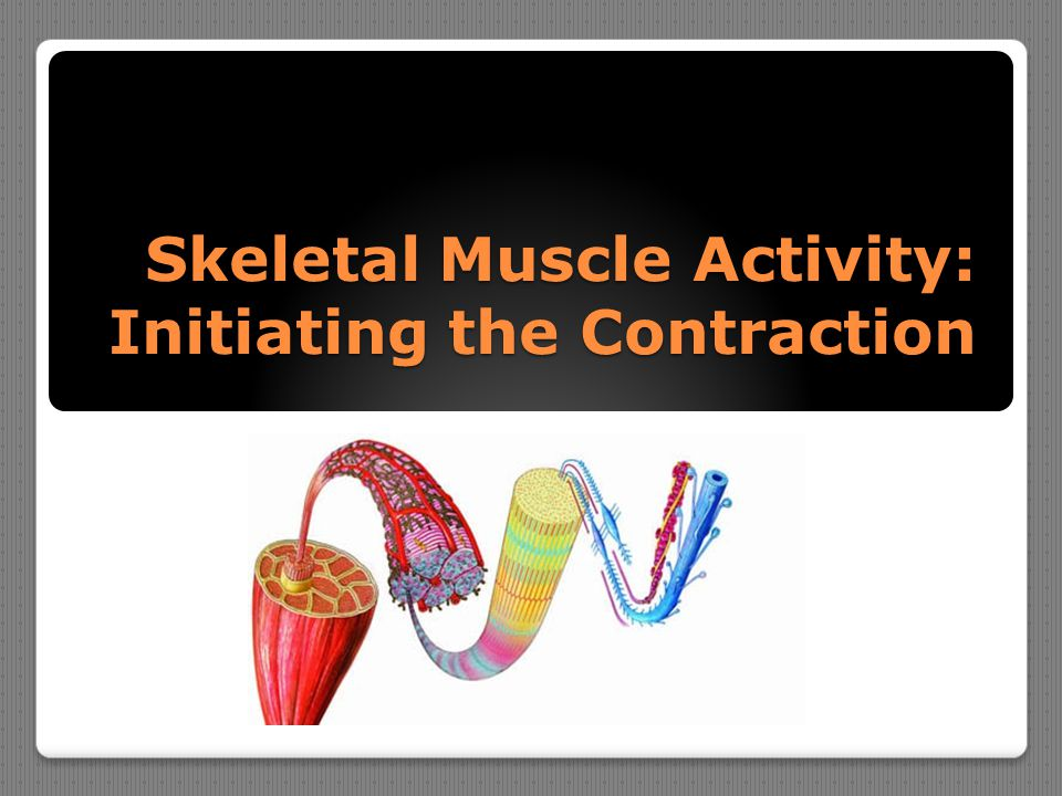 Skeletal Muscle Activity: Initiating the Contraction