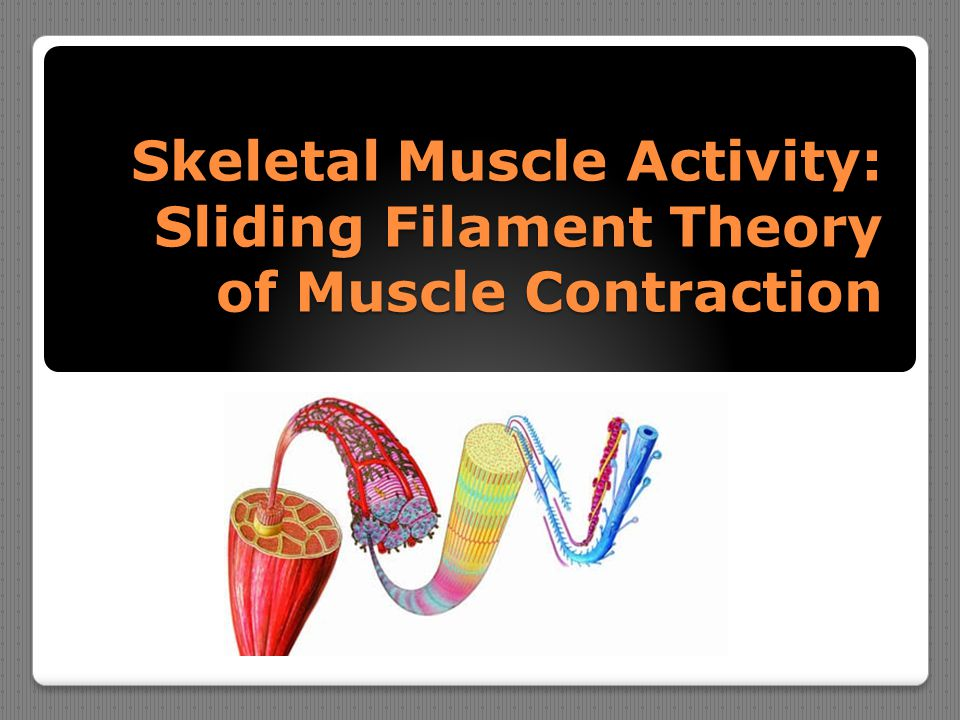 Skeletal Muscle Activity: Sliding Filament Theory of Muscle Contraction