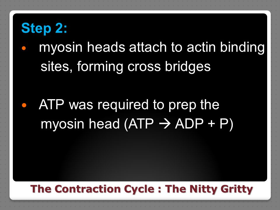 The Contraction Cycle : The Nitty Gritty
