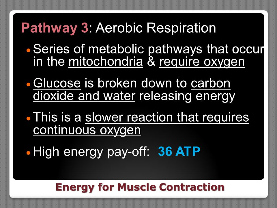 Energy for Muscle Contraction
