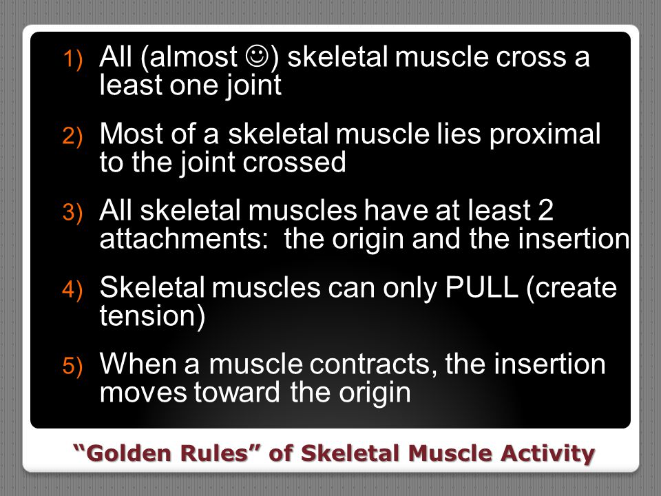 Golden Rules of Skeletal Muscle Activity