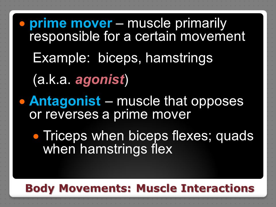 Body Movements: Muscle Interactions