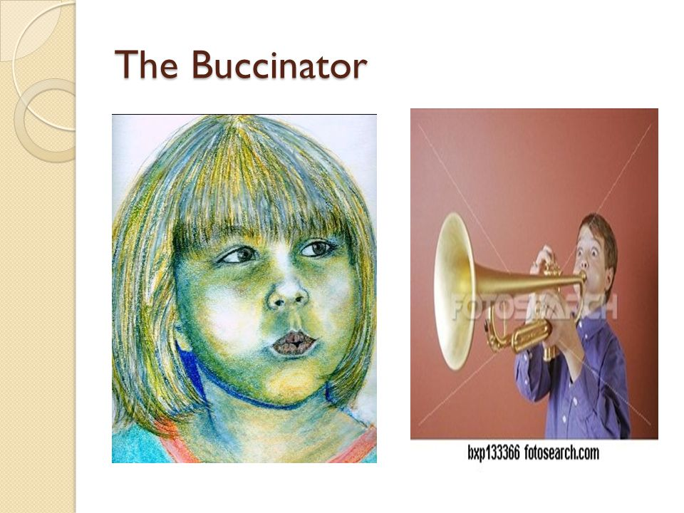 The Buccinator