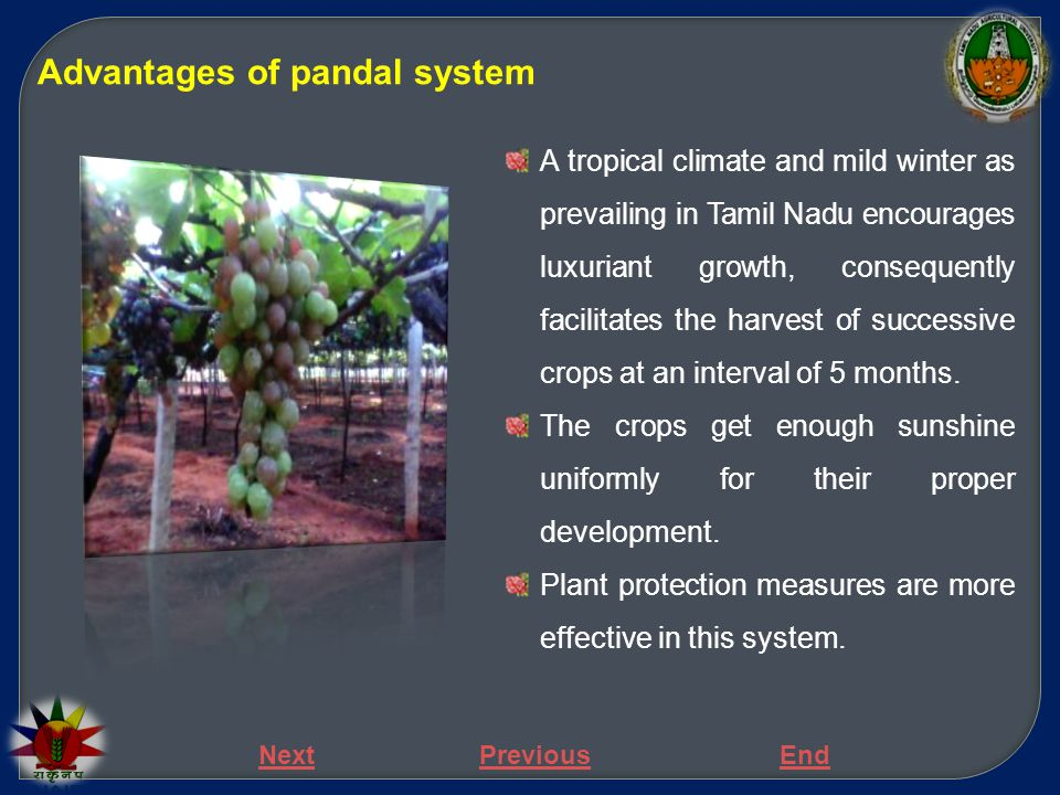 Advantages of pandal system