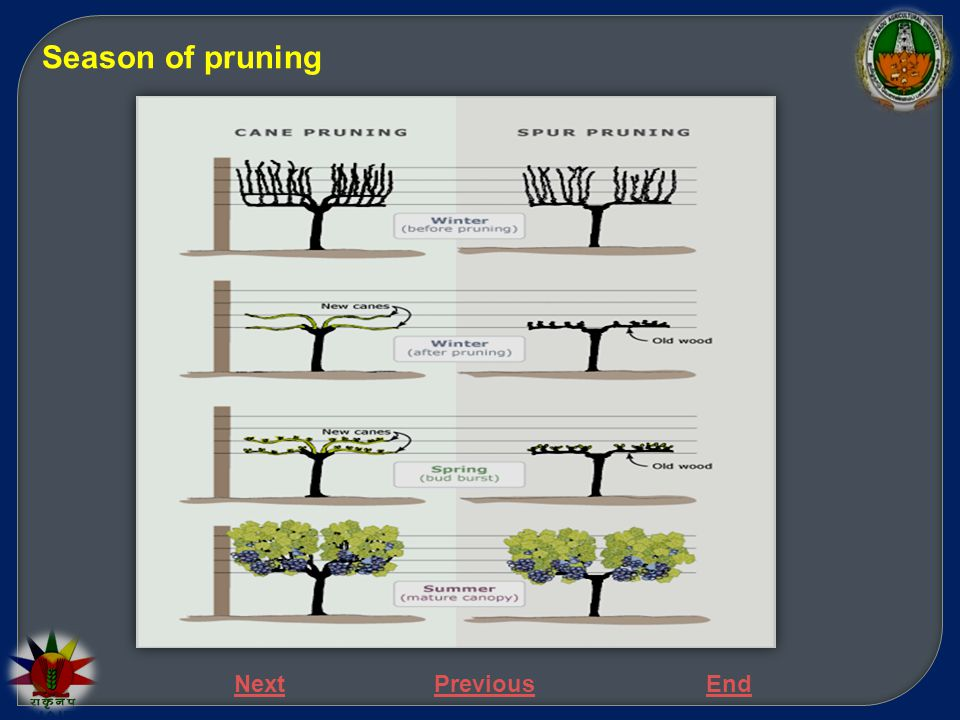 Season of pruning Next Previous End