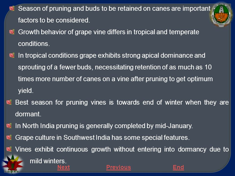 In North India pruning is generally completed by mid-January.