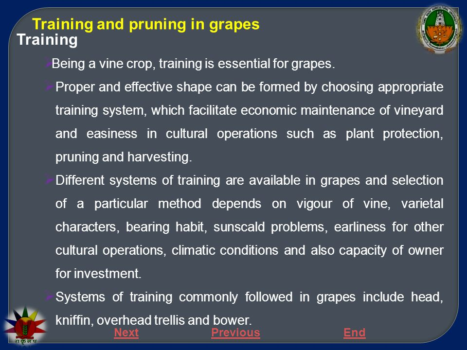Training and pruning in grapes Training