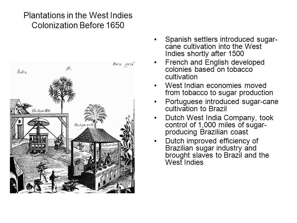 Plantations in the West Indies Colonization Before 1650