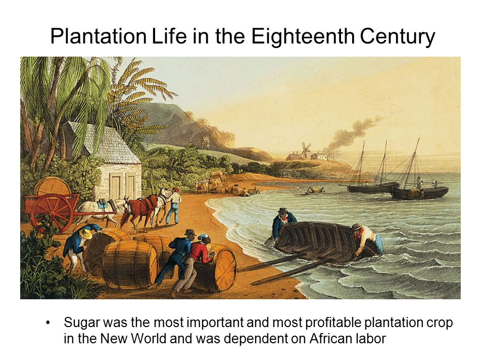 Plantation Life in the Eighteenth Century