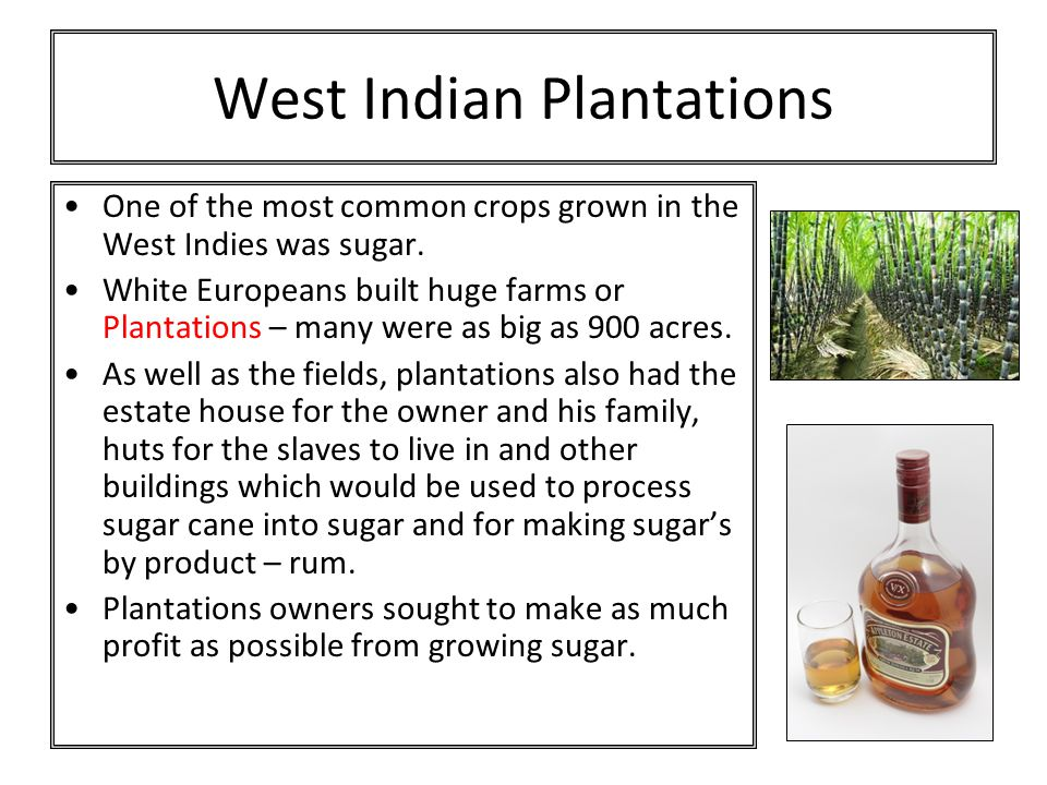West Indian Plantations