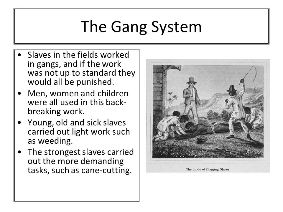 The Gang System Slaves in the fields worked in gangs, and if the work was not up to standard they would all be punished.
