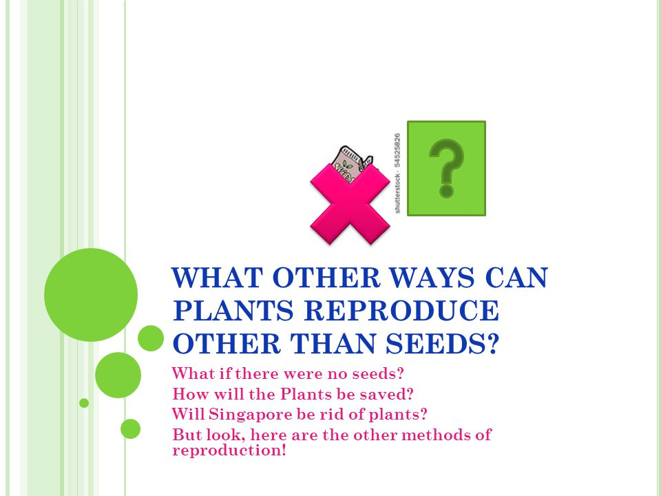 WHAT OTHER WAYS CAN PLANTS REPRODUCE OTHER THAN SEEDS