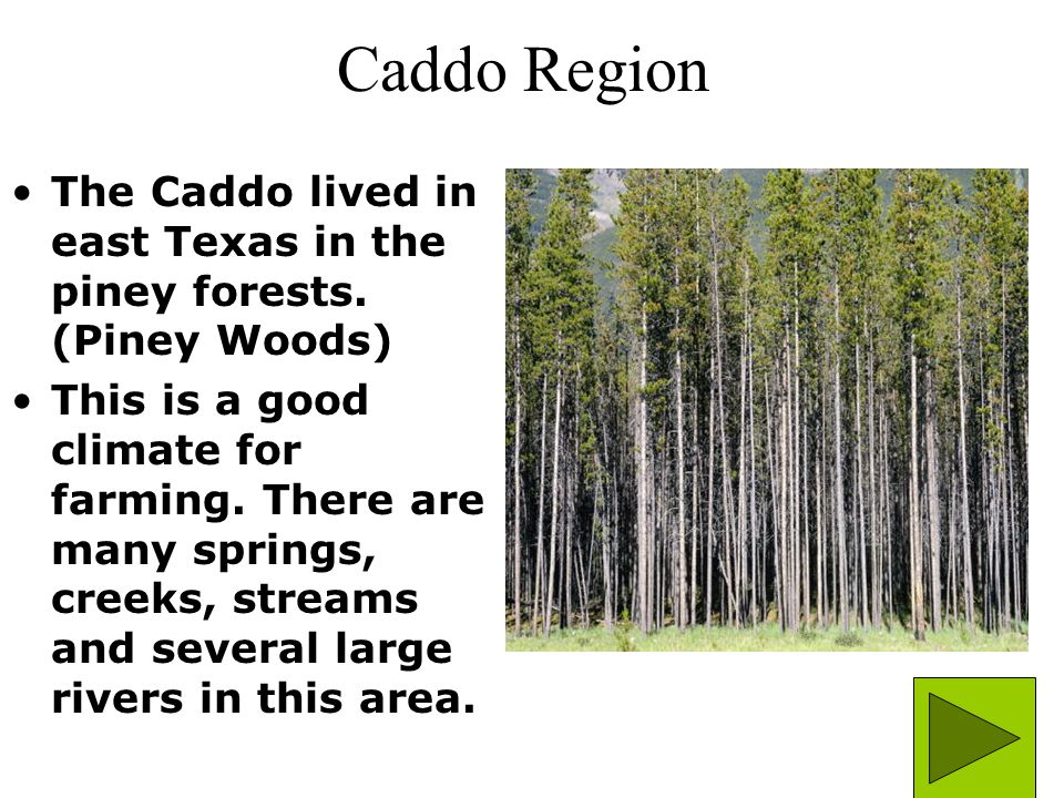 Caddo Region The Caddo lived in east Texas in the piney forests. (Piney Woods)