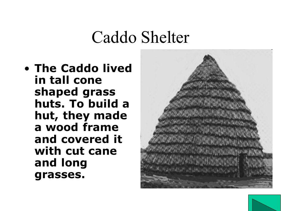 Caddo Shelter The Caddo lived in tall cone shaped grass huts.