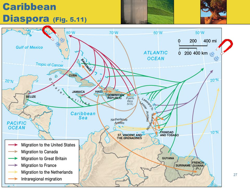 Caribbean Diaspora (Fig. 5.11)