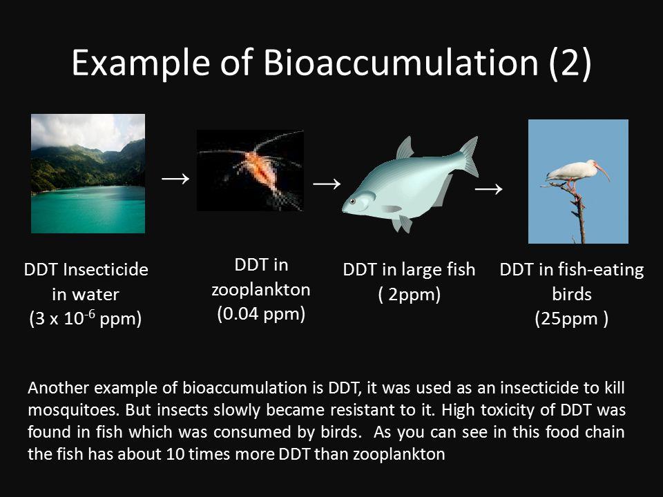 Example of Bioaccumulation (2)