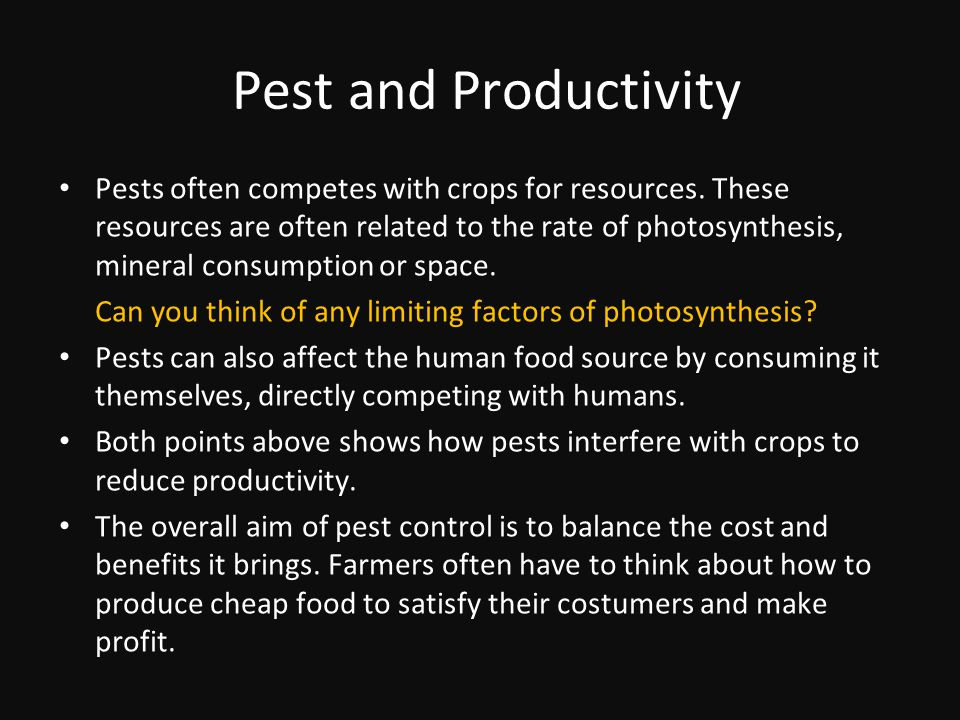 Pest and Productivity