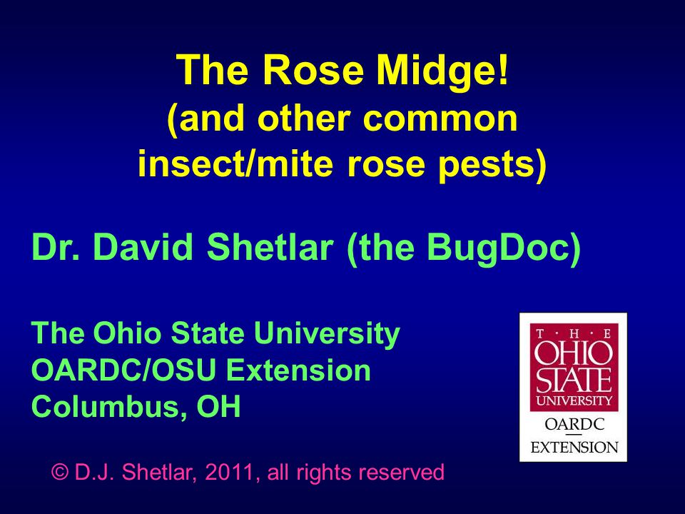 (and other common insect/mite rose pests)
