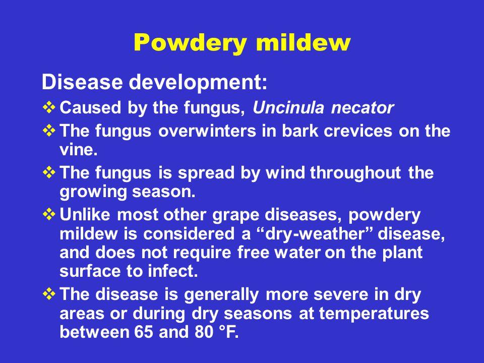 Powdery mildew Disease development: