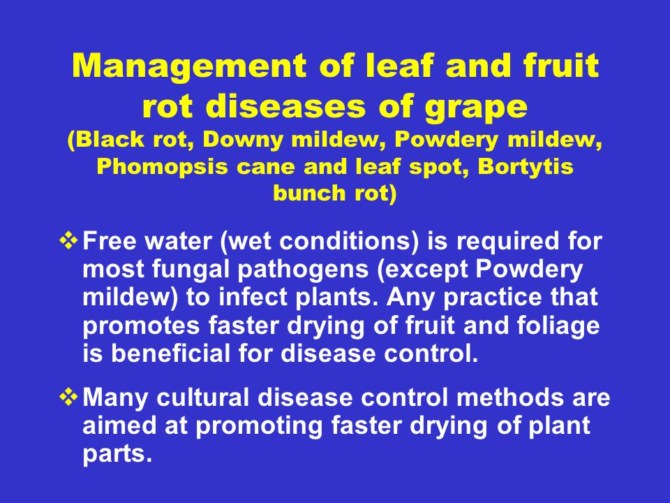 Management of leaf and fruit rot diseases of grape (Black rot, Downy mildew, Powdery mildew, Phomopsis cane and leaf spot, Bortytis bunch rot)