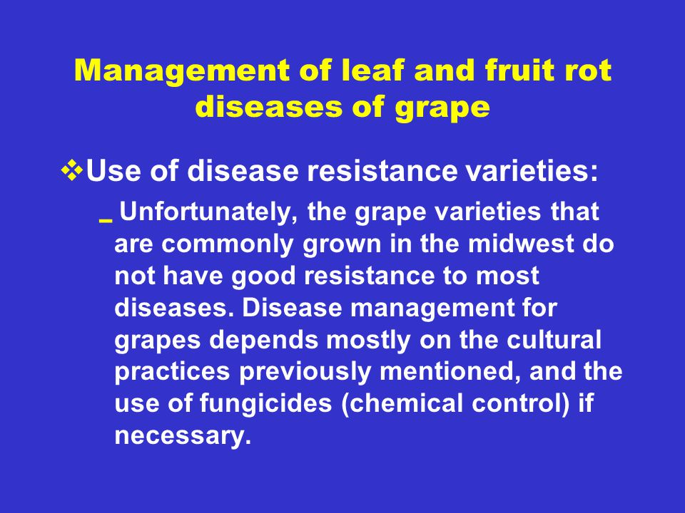 Management of leaf and fruit rot diseases of grape